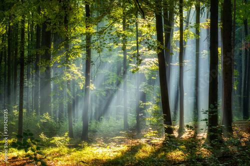 piekny-poranek-we-wiosennym-lesie