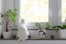 Back View Of White Cat Sitting...