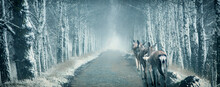 Young Deer Walk On A Dark Winter Birch Alley