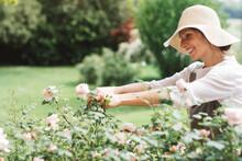 Smiling Woman Picking Roses In...