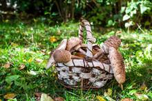 Basket Full Of Various Mushrooms Lying On Grass