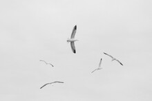 Black And White Image Of Birds...