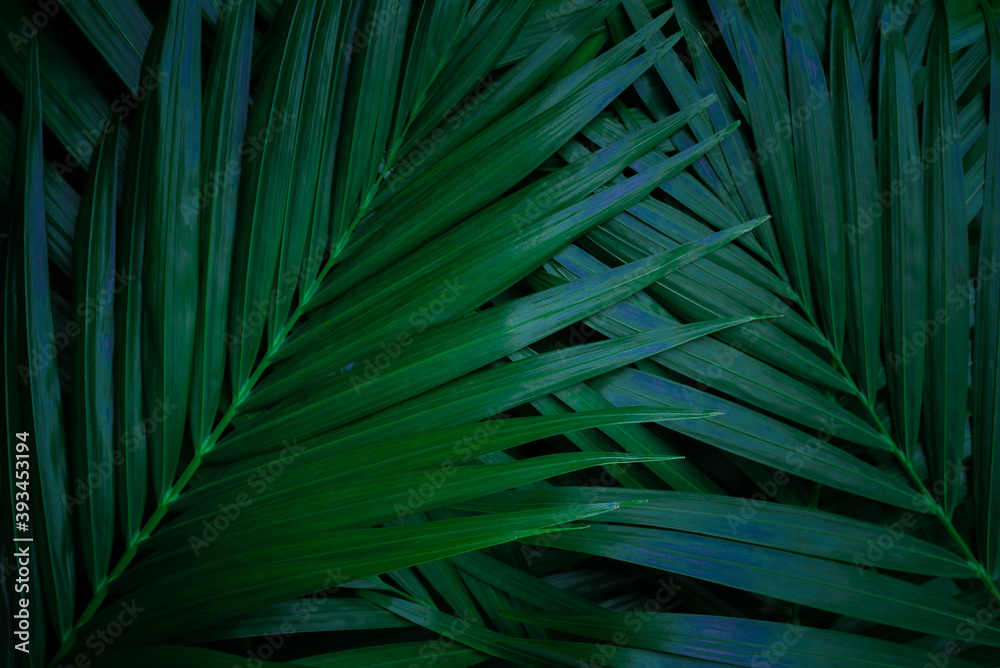Fototapeta tropical green palm leaf and shadow, abstract natural background, dark tone