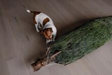 Christmas Tree And Dog.