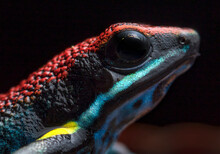 Colorful Frog Detail