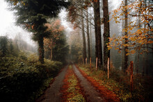 Nice Forest With Many Trees Su...