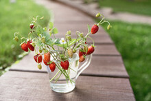 Strawberry Twigs With Berries In A Cup.