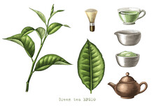 Green Tea Collection Hand Drawing Engraving Style Clipart Isolated On White Background