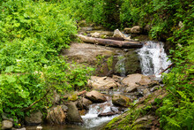 Mountain Stream In The Forest....