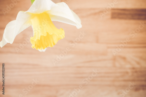 Fotografie, Obraz High angle shot of a wild daffodil on a wooden surface - copy space