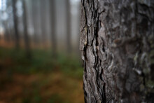 Pine Trunk In The Forest Close Up, Natural Eco Background And Texture Minimalistic Image