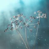 Jesienna impresja, kwiaty, krople