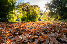 Golden Autumn Leaves Background