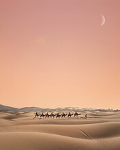 Camel Train On Desert Against Sky During Sunset
