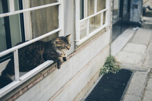 Homeless Cute Cat Lies On The ...