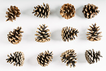 Pine Cone On White Background. Fall Concept. Flat Lay, Top View, Copy Space