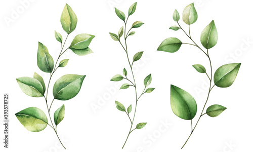 Set of painting watercolor leaves, leaf and branches. Hand drawn floral design elements Isolated on white for patterns, laurels, frame, compositions.