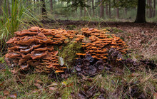 Group Of Fungi In The Forest D...