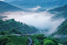 Early Morning Scenery Of Tea Gardens In Fresh Spring Atmosphere With Ethereal Fog In The Valley & Silhouette Of Distant Mountains In Pinglin, A Rural Town Famous For Tea Plantation Near Taipei Taiwan