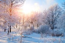 Winter Landscape - Frosty Tree...