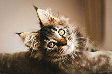 Portrait Of An Adorable Furry ...