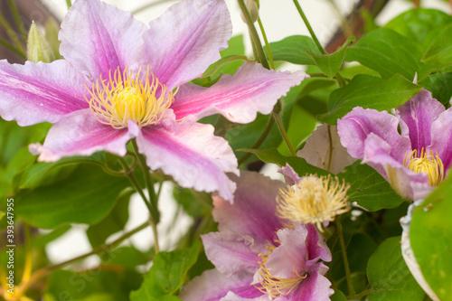 Fototapeta Piękny kwitnący ogród z kwiatami w słońcu  obraz