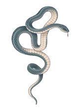 Vector Hand Drawn Dark Twisted Snake