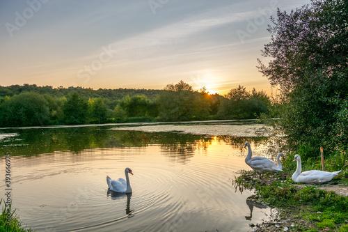 Fotografie, Tablou un coin paisible et serein au bord de l'eau