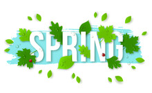 Beautiful Spring Background With Leaves, Lady Bugs And Drops. Vector Illustration. Text Spring With 3D Effect Foliage. Creative Spring Concept. Dew On Leaves.