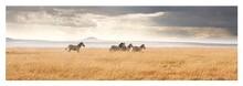 Zebras Walking On Field Against Cloudy Sky