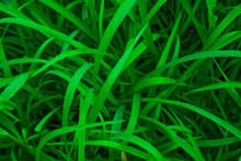 Green Leafy Meadow. Big Grass. Can Be Used As A Background.