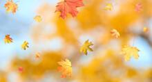 Autumn Season. Beautiful Leave...