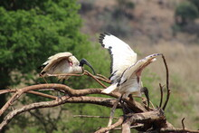 Photos Taken In Rhino And Lion Nature Reserve, Krugersdorp.