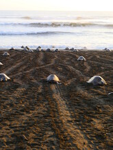 High Angle View Of Turtles On Beach
