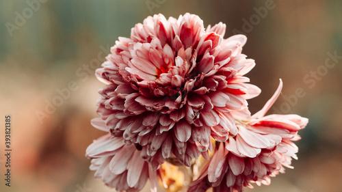 Fotografiet Soft summer background of flowers close up