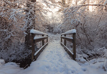 Snow Covered Wooden Bridge With Foot Steps In Front Of Forest In The Winter Season