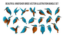 Beautiful Kingfisher Birds Vector Illustration Bundle Set With Gradient Color