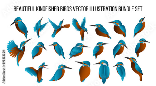 Valokuva beautiful kingfisher birds vector illustration bundle set with gradient color