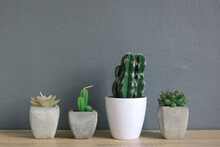 Succulents And Cactus Plants I...