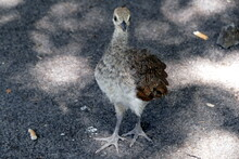 The Animals Of The Biopark Of Rome,italy (zoological Garden)