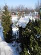 Działka Zimą Zima Śnieg