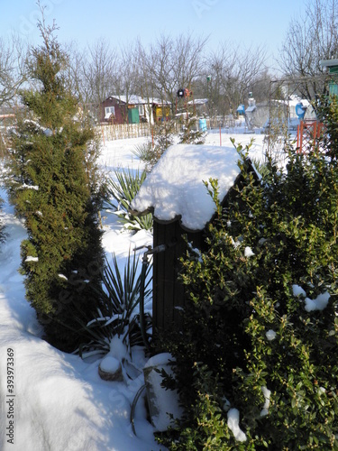Fototapeta Działka Zimą Zima Śnieg obraz
