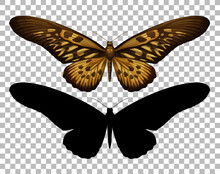 Butterfly And Its Silhouette O...