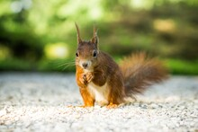 Adorable Squirrel With Bokeh