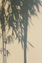 Shadow Of Tree On Wall