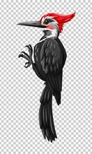 Black Woodpecker On Transparen...