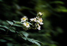 Close-up Of White Flowering Pl...