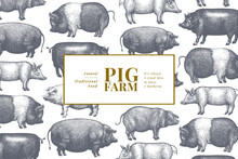 Hand Drawn Farm Animals Background. Vector Pig Design Template. Vintage Hog Illustration