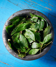 Fresh Bay Leafs In An Old Metal Bowl On A Blue Wooden Background