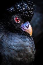 Tufted Bird